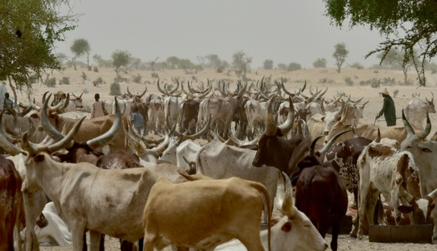 Unease as Lai Mohammed's village serves Fulani herders with quit notice